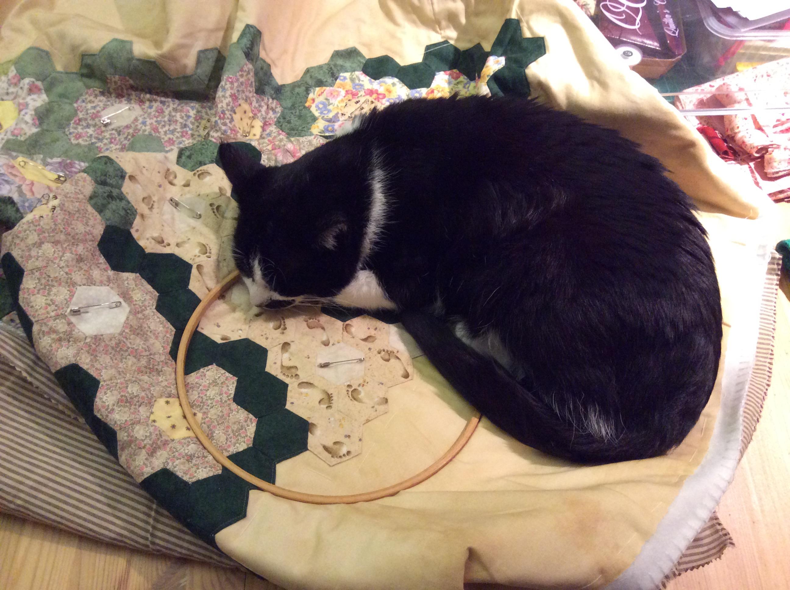 Quiltdecke - Grandmas Flower Garden - unvollendet handgenähte 6-Ecken-Technik und mittendrauf eine schwarz-weiße Katze schlafend